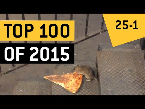 Top 100 Viral Videos of the Year 2015 || JukinVideo (Part 4)