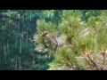Relaxing Nature Sounds  Inspiring thunderstorms   bird sounds in summer   Live 24 7
