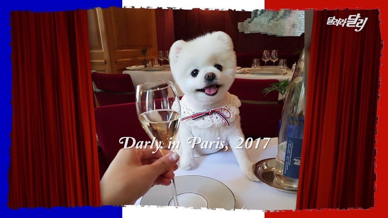 프랑스 파리 미슐랭 레스토랑에 간 달리😋🍽