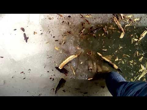 Страшные кадры с рыбалки