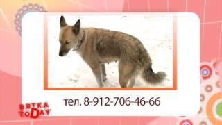 Потерялась собака. Вятка Today 03.02.2016