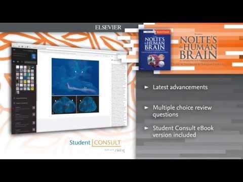 nolte's-the-human-brain,-7e