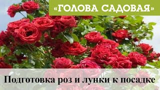 Голова садовая - Подготовка роз и лунки к посадке