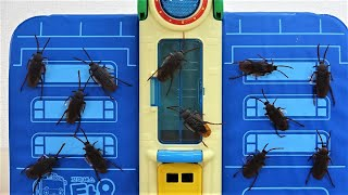 Tayo the little bus School Attack by Gigantic Insect Toy Monster Thomas, Chuggington