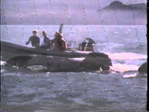 Free Willy 3: The Rescue (1997) Sub Indonesia | INDOXXI