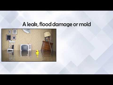 Water Damage Restoration - Leak - Flood - Mold Emergency Cleanup - Coconut Creek