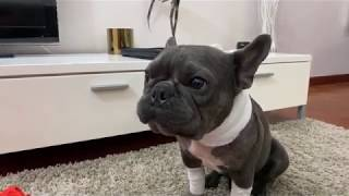 Dogs Surgery ❤️