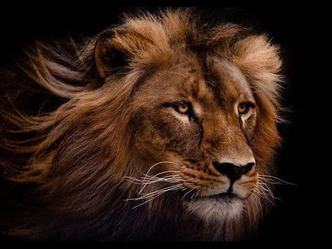 How to Empower Yourself - It's Time to Roar Like a Lion ...