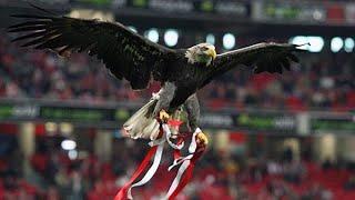 S.L. Benfica vs C.S.K.A. MOSKVA (1-2 Champions) -Voo da águia