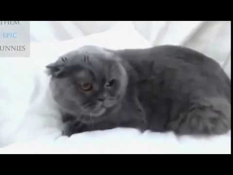 Angry Cat Fails l The Meanest Cats Ever l Compilation September 2016