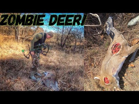 I SHOT A ZOMBIE DEER W/ My BOW 😳 | Bowmar Bowhunting |