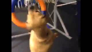Dancing Stella dog.