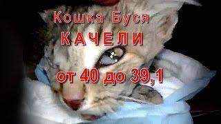 Кошка Буся Качели от 40 до 39,1