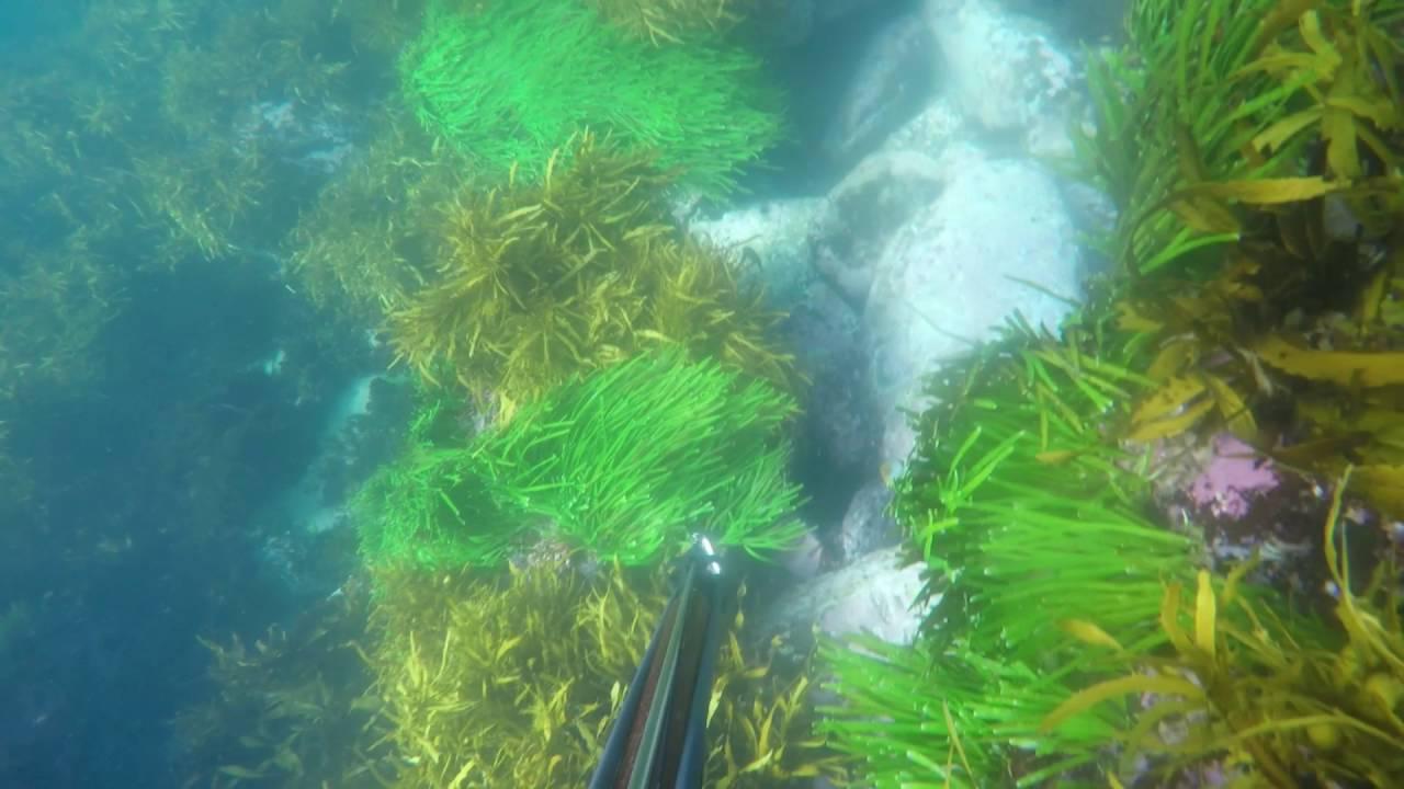 Spearfishing lake macquarie
