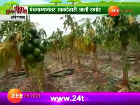 Aurangabad Uncertain Rain Damage Crops