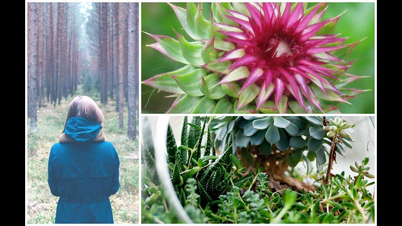 Medicinal Herbs | Mountain Rose Herbs | HUGE HAUL | Attic Anatomy ...