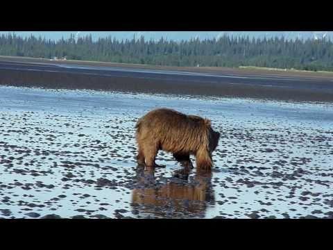 Silver Salmon Creek Lodge Bear Viewing Trip in Alaska, USA