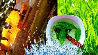 Как избавиться от холестерина, мочевой кислоты, высокого сахара в крови и похудеть с 2 ингредиентами