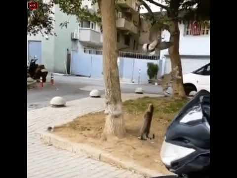 Cats jumping super high