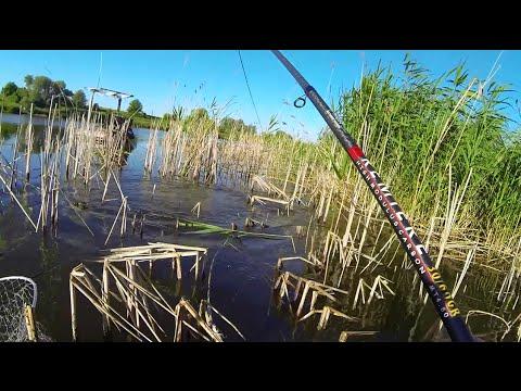 Ловля карпа на летнюю мормышку. Отчет с рыбалки(08. 06. 2015)