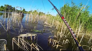 Ловля карпа на летнюю мормышку. Отчет с рыбалки(08.06.2015)