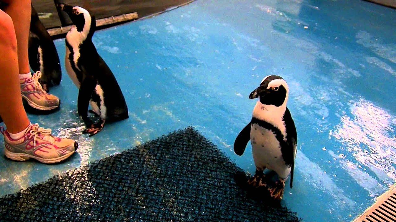 The Long Island Aquarium Exhbition Center Penguin