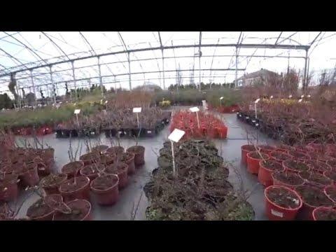 Покупаем саженцы и цветы в садовом центре Гавриш