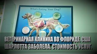 видео Ветеринарная консультация