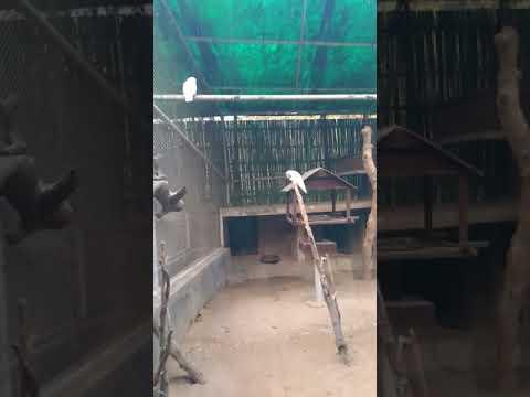 Delhi zoo videos(2)