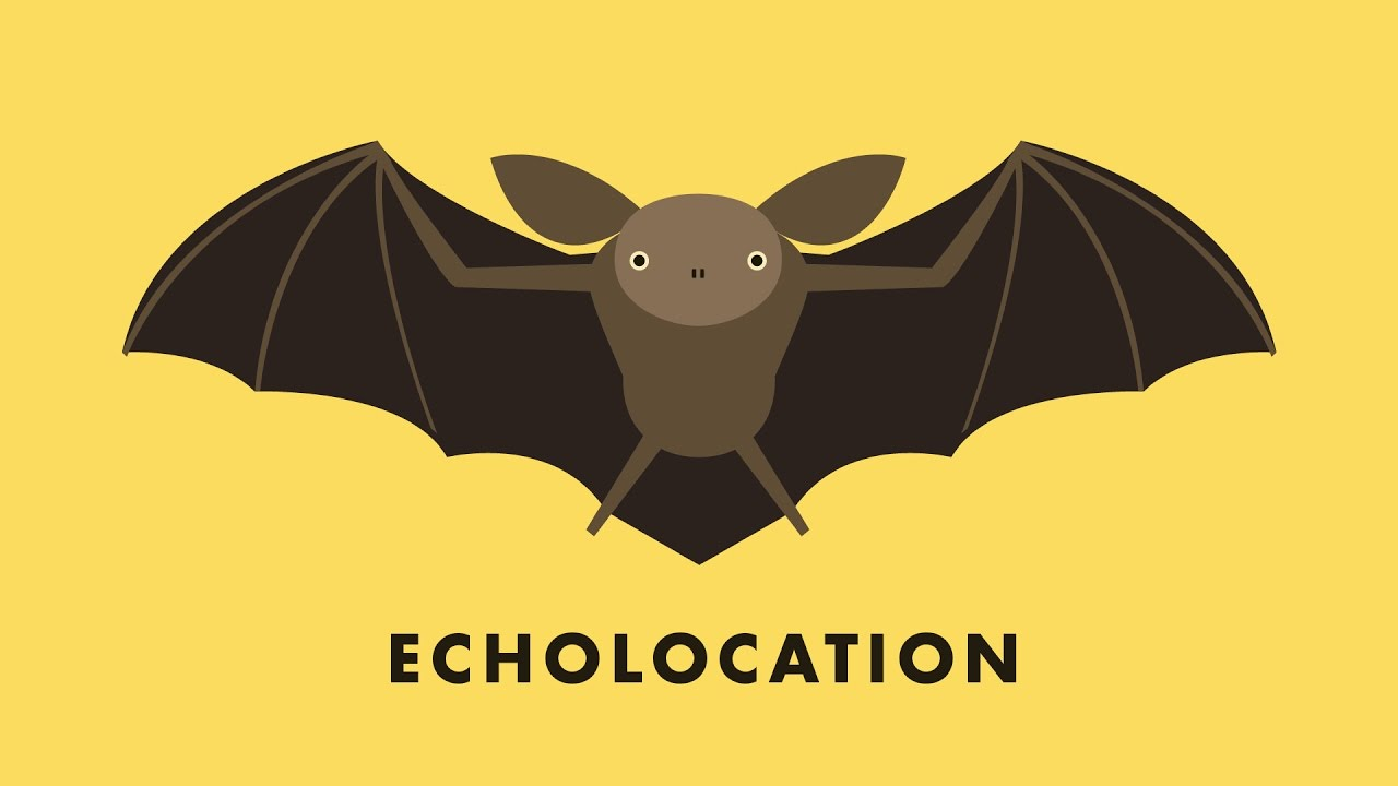 echolocation youtube