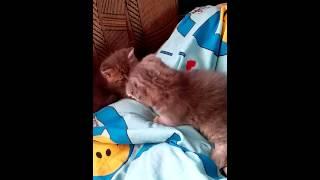 Котята авито