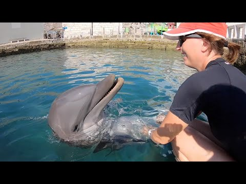 Internship Program - Dolphin Quest Bermuda