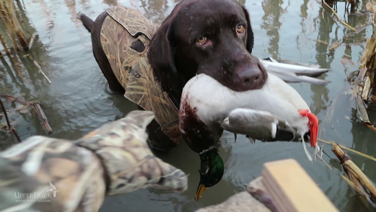 Call Videos | UPPERDUCK BEST DUCK CALLS WATERFOWL HUNTING
