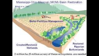 CHNEP Conservation Lands: Using wetlands to prevent phosphorus and nitrogen pollution