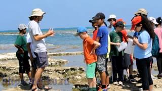Урок природоведения в израильской школе