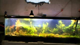 Aquarium Rack System, Reading Viewers comments, Capping Bulk head on125 gallon planted tank