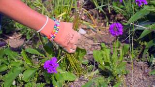 Garden Clean-Up - Diseases, Pests, Weeds And Deadheading