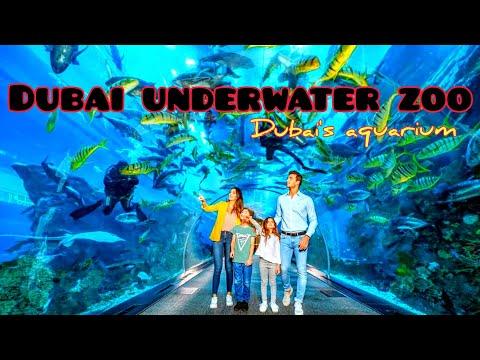 Dubai Underwater Zoo | Unique Dubai's Aquariums | 2020 | Horizon Dynasty.