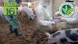 Các giải pháp ứng phó với bệnh dịch tả lợn Châu Phi   VTC16