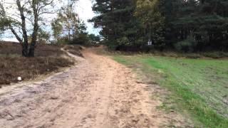 Im Wald und auf der Heide 04