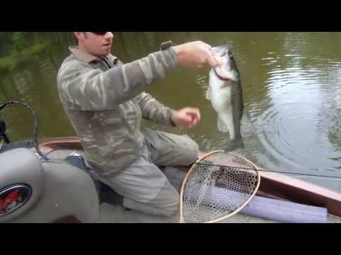 Fly Fishing for Tennessee Bass