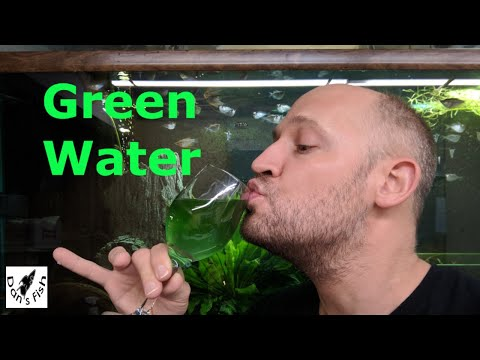 How To Make GREEN WATER...Perfect Food For Baby Fish!!!