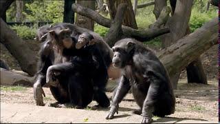 Animals Like Us : Animal Emotions - Wildlife Documentary