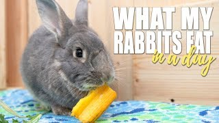 WHAT MY RABBITS EAT IN A DAY