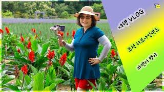 여행 브이로그(Vlog) 포천 허브아일랜드 라벤더축제 …
