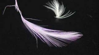 The Corrs - Toss the Feathers!