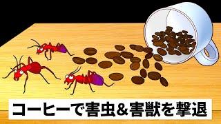 お家のアリを駆除!天然の害虫撃退法