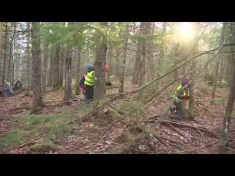 Kids run free in forest school