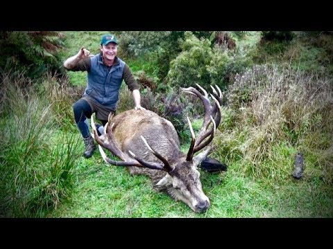 #waikarimoana Hunting Red Stag With 308 Win In The Roar In New Zealand Part 124