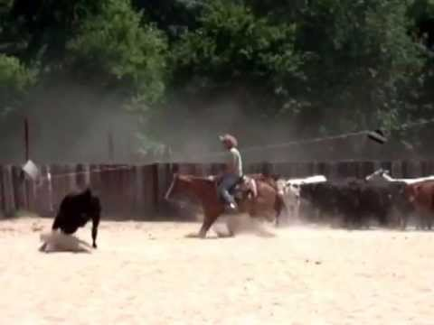AQHA Trained Cutting Horse FOR SALE